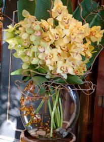 Cymbidium orchids in a vase